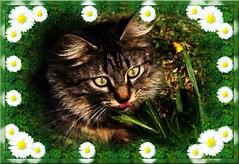 Lusy (Simply Viola) Tags: cats animals kittens felini gatti animali gattini