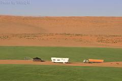 Wheat farm in the desert (TARIQ-M) Tags: texture truck landscape sand waves desert wheat dunes tent riyadh saudiarabia         canonef70200mmf4lusm   canon400d