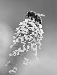 B&W Bee (Yousef Al-Asfour) Tags: abstract art nature wow nikon nikkor magical photooftheday naturesfinest blueribbonwinner nikonians outstandingshots nikonstunninggallery abigfave outstandingshotshighlight worldbest anawesomeshot anawesomeshotb impressedbeauty aplusphoto superbmasterpiece natursfinest diamondclassphotographer flickrdiamond ysplix excellentphotographerawards theunforgetablepicture ~vivid~ naturewatcher kuwaitvoluntaryworkcenter  anawesomeshot