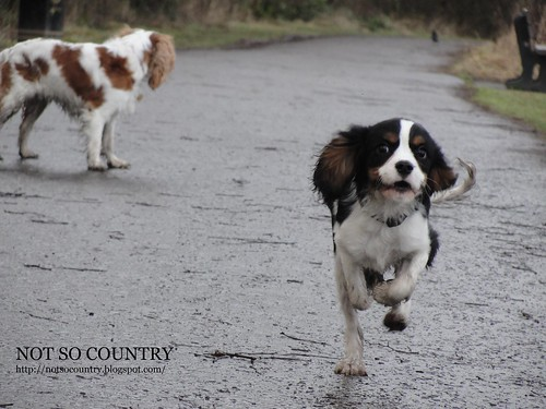 off lead