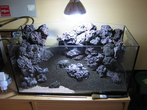 New scape... | AquaScaping World Forum