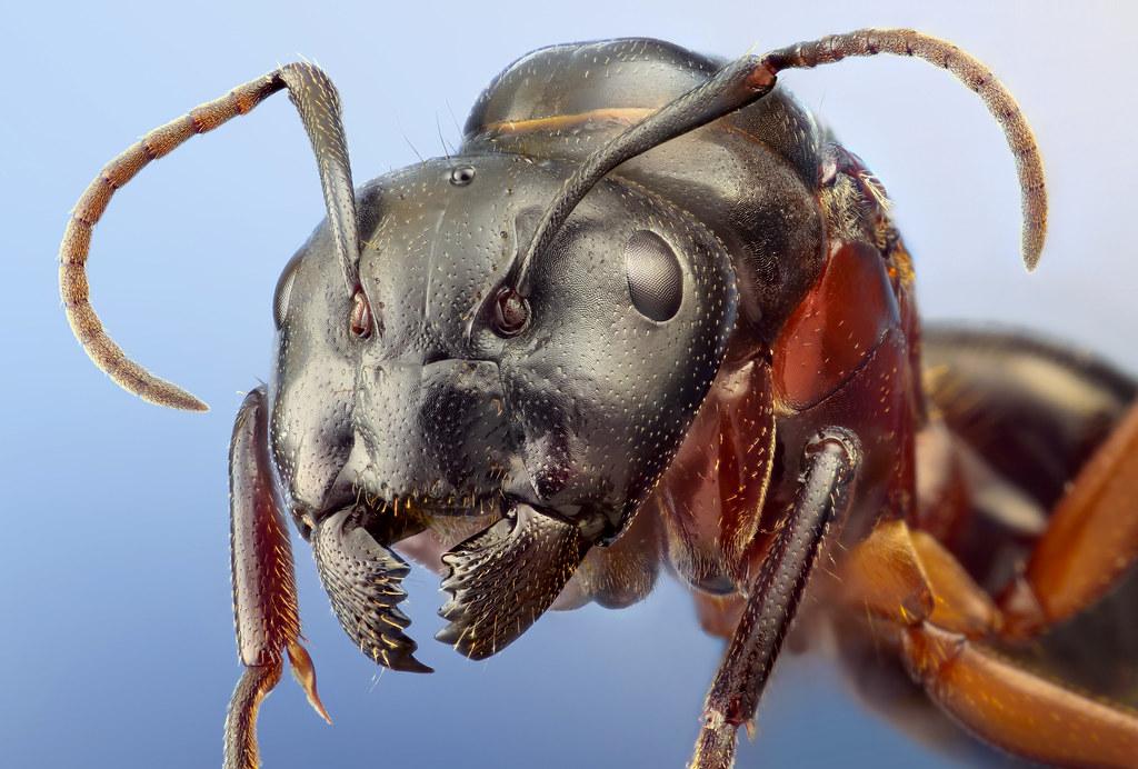 [Macro] Insectos como nunca los viste