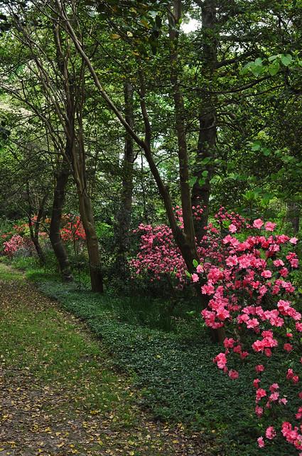 Spring Path 2