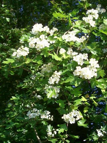 Fleurs,....fruit,.....tout ce qui se mange,...se boit....ou qui vient de la nature.......... - Page 39 5664827889_bc7c46f470