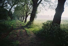(Aage Drake) Tags: morning trees london spring haze primrosehill olympusxa fujisuperia200