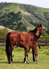Single Track (dwinning) Tags: horse baby mountain fence child hill mother ridge newborn equine foal