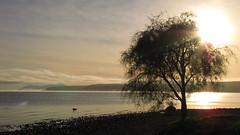 Lake Taupo (blue polaris) Tags: morning newzealand lake sunrise landscape volcano nationalpark scenery central crater nz northisland taupo tongariro volcanic plain