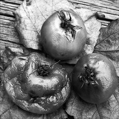 Tomatoes (- Jacques) Tags: stilllife tomato e1