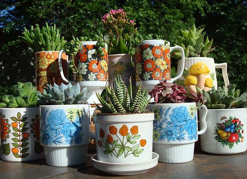 Hollyrocks Dish Gardens