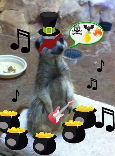 Rock roll meerkat