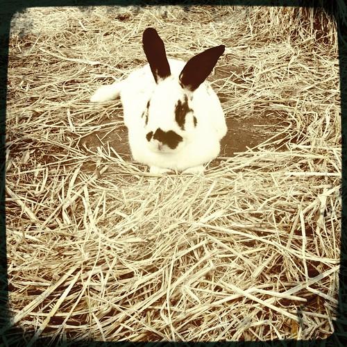Iris The Bunny