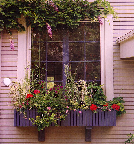 WindowBoxes_0003