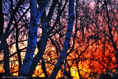 Winter Fire (C. Roy Yokingco) Tags: california ca travel blue winter sunset red orange tree northerncalifornia yellow catchycolors photography nikon branches handheld nikkor westcoast stockton goldenhour centralvalley winterfire sanjoaquindelta sanjoaquincounty d700 afs28300mm nxtrfoto nextierphotography