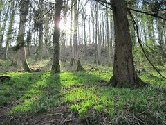 Its all about the light - and how the shadows fall (joysaphine) Tags: world nature sunshine bluebells wales march spring amazing carmarthenshire flickr shadows fiat joy iq creatures lux naturesbest sunnyday gmt fiatlux 2011 haveagreatday thatslife itsallaboutthelight llanddowror thebeautyofnature flickraward naturesbeauties excapture fl♥ckrextraordinarycapture thisphotorocks shining★star leagueofwomenphotographers ★highqualityimages★ thebeautyoftrees showmemagic monkeyawards iqimagequality greatmotherearth addictedtonature joysaphine picsforpeace llanddowrornaturetrail llanddowrorwoods thepales spring2011 lifeisgreatcestlaviesoistdasleben thebeautifulelementcalledphotography fotografiaemocion♥emotionalphotography ♥worldphotography♥ mybeautifulcreativeheartbeatsonflickr beautifulworldviews marchmanorbierwalesandengland amazingnatureworldcreatures