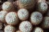 alien world (the_lighter) Tags: cactus roma 50mm nikon dof d60 piantegrasse ortobiologico aridoplants