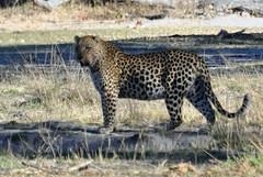 CSC_0063edit (Jim Eagan) Tags: botswana 2010 secluded