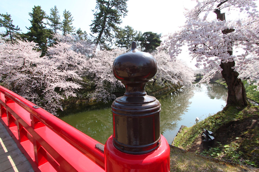 Hirosaki Park Sakura (8)
