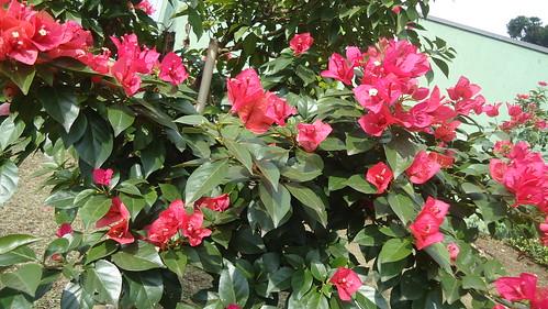Quinta Flower Feliz!!!! De novo!!! by Maria Sica