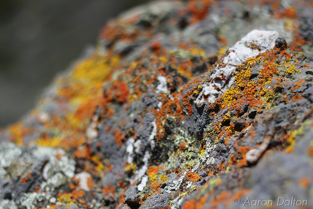 More Colorful Lichens