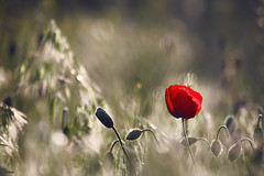 :) (seyed mostafa zamani) Tags: camera new flowers light sunset abstract flower color macro cute green art love nature colors beautiful beauty face look canon landscape happy eos hope nice colorful asia angle iran bokeh arts azerbaijan poetic romance lovers iso story vision dreams to abstraction iranian mm concept brunette narrative  lovly            azarbayjan coquetry   eos450d 450d   marand      natvryalyst