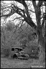 Abandoned Truck and Guardian Tree - Walla Walla N6006e (Harris Hui (in search of light)) Tags: harrishui nikond300 nikon18200mmvr nikon d300 nikonuser 1820mm abandonedtruck international abandoned truck tree guardian bw blackwhite digitalbw mono monochrome wallawalla wallawallahotairballoonstampede hotairballoonstampede washington us vancouver richmond bc canada vancouverdslrshooter