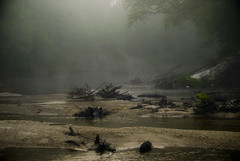 Come and Find Me (MattGerlachPhotography) Tags: morning sleeping water fog brooklyn creek river matt mississippi photography early logs eerie overnight gerlach canoetrip desotonationalforest mattgerlachphotography blackcreekcanoerentals