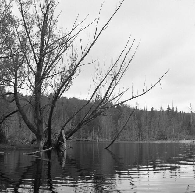 Southern Pond