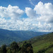 Reserva forestal Arvì