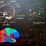 "limbic temporal functional 2 <a style=""margin-left:10px; font-size:0.8em;"" href=""http://www.flickr.com/photos/30723037@N05/5867663346/"" target=""_blank"">@flickr</a>"