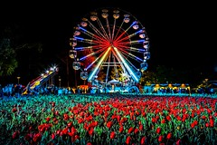 Floriade At Night-11