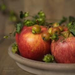 Les pommes  (Apples) (l'imagerie potique) Tags: limageriepotique poeticimagery apples pommes automne autumn fall hops houblons stilllife naturemorte color carr squareformat pommessauvages crabapples