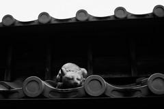 20160917 Ise 11 (BONGURI) Tags:    jp bw monochrome cat    okageyokocho  okagealley okagestreet shrine sintoshrine  isejingu jingu   naiku  koutaijingu  tenshokoutaijingu  amaterasimasusumeoomikami  ise  mie  nikon df afsnikkor50mmf18gspecialedition