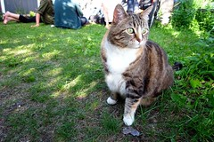 yard party cat (sare bear) Tags: calgary houseparty yard cat kitty sledisland