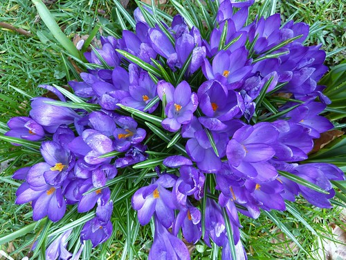 Spring Colours at Greenbank