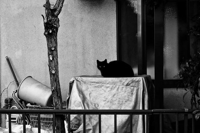 Today's Cat@2011-03-26