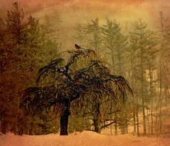 ...winter just won't go away!!! (xandram) Tags: winter tree photoshop cardinal textures selectbestexcellence sbfmasterpiece