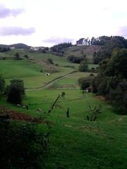 P171010_17.53 (naialaka) Tags: natura basoa belarra baserria berdea paisajea