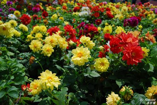 很像假花的花