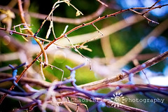 Along The Back Fence (Chaos&BlissPhotography) Tags: spring bokeh chainlink ff fencefriday ayearoflivingpositively sitspics