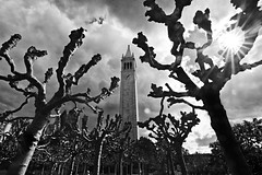 Campanile Clouds (geekyrocketguy) Tags: cloud sun tree clouds berkeley tokina campanile 7d uc effect carillion berkely berkley carillon sunstar universityofcalifornia 1116 1116mm
