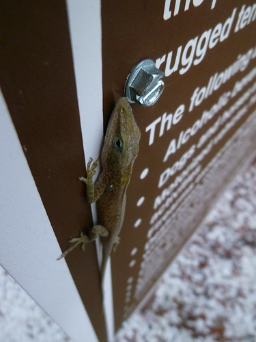 Lizard on sign