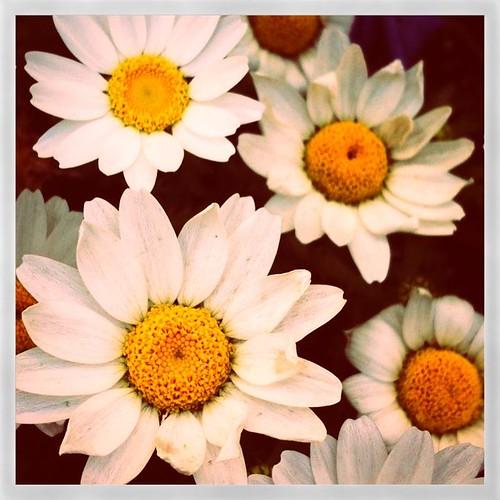 白いお花 #SuperPopCam