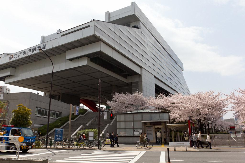 Tokyo Ryogoku Sakura 4