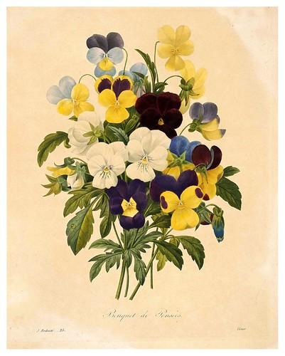 004-Pensamientos-Choix des plus belles fleurs…1827- P.J.Redoute
