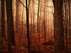 [フリー画像] 自然・風景, 樹木, 森林, カナダ, 201104210500