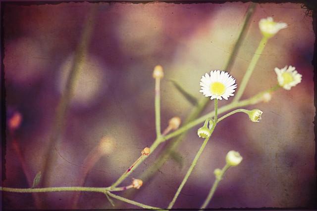 floweratticvintagewithtexture