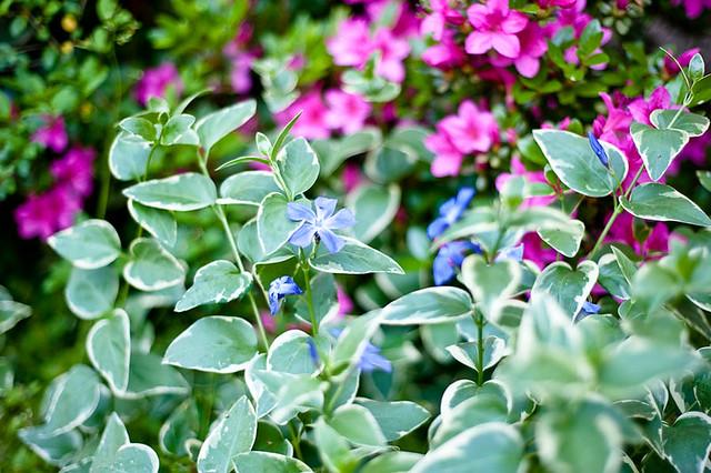 FlowerGarden2011-12