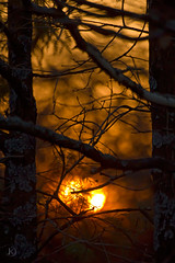Evening in forest (Chrisseee) Tags: trees sunset orange sun silhouette canon finland evening branch bokeh naantali mygearandme kristiinahillerstrm mygearandmepremium chrisseee mygearandmebronze mygearandmesilver mygearandmegold mygearandmeplatinum