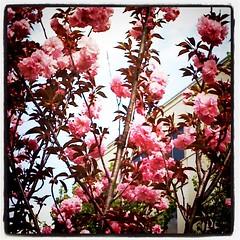pretty pink tree