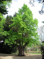 Tree in a Tree